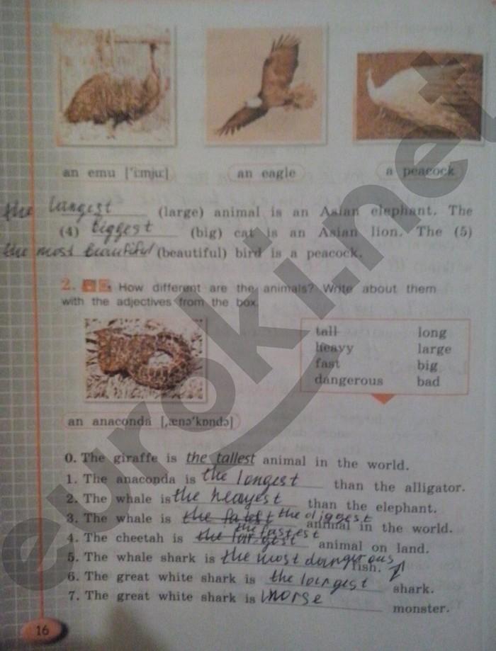 тетрадь по английскому страница 16