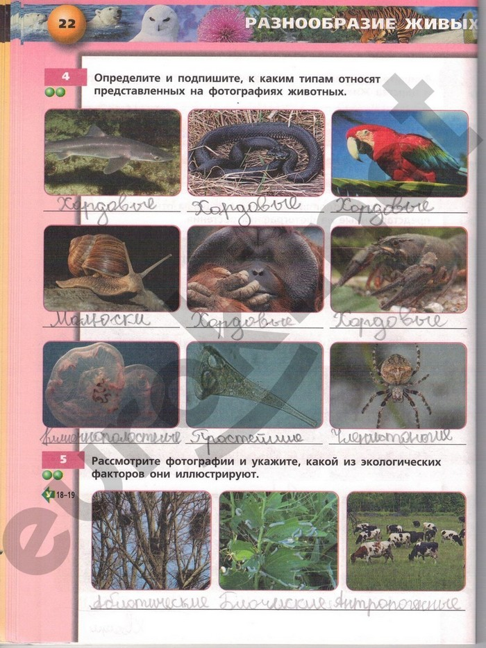 ГДЗ Рабочая тетрадь по биологии 8 класс Сонин Н.И.