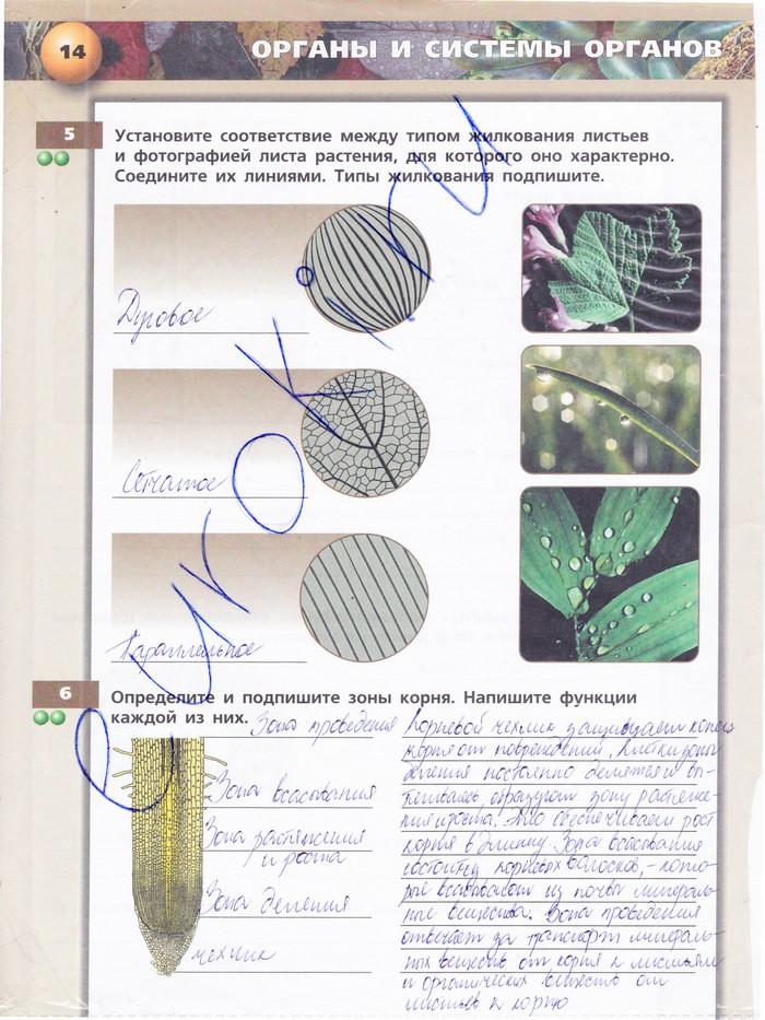 Решебник по биологии 5 класса тетрадь тренажёр сухорукова
