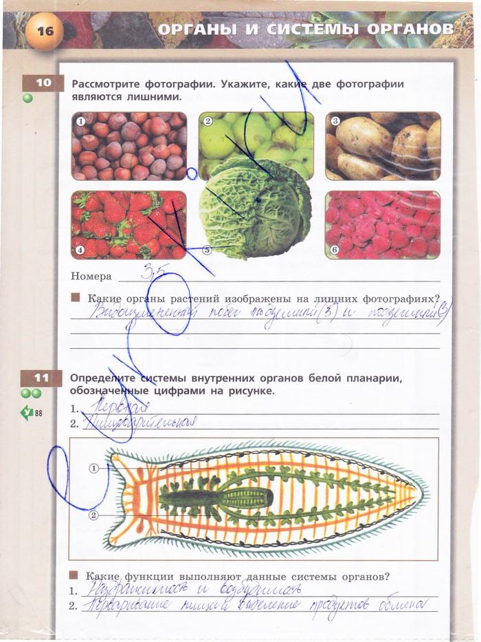 Решебник по биологии 6 класс тетрадь тренажёр 2 часть