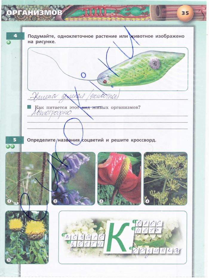 Гдз 6 Класс Биология Рабочая Тетрадь Сухорукова 2 Часть