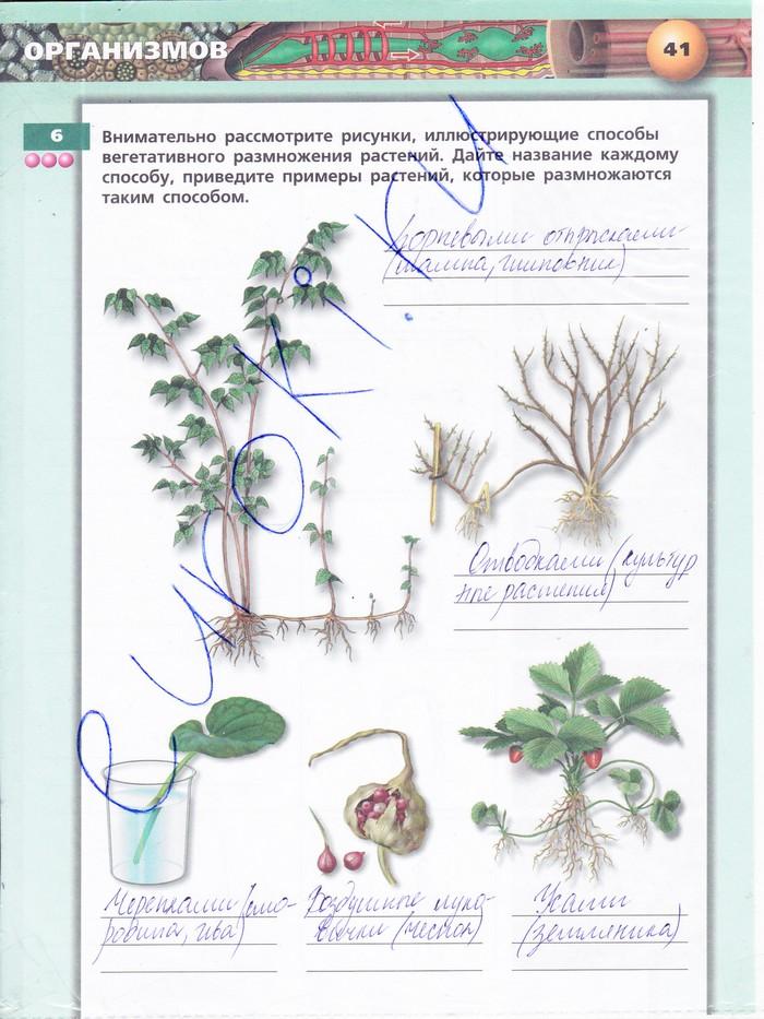 тетрадь строение авторысухорукова стебля класс гдз 6 кучменко практикум биология