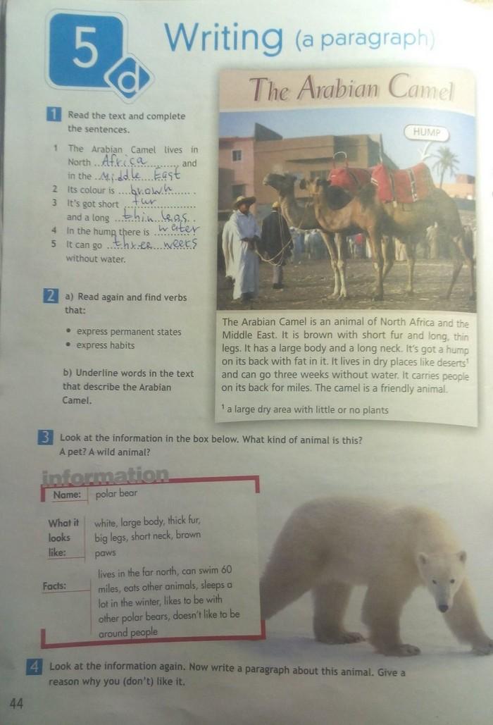 английский 5 класс переводом страница 43